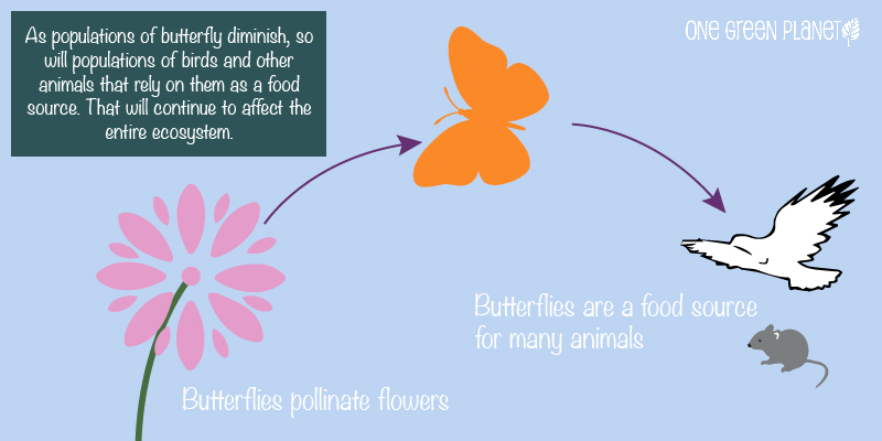 butterfliesandtheecosystem