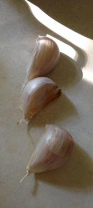 fall sewing garlic