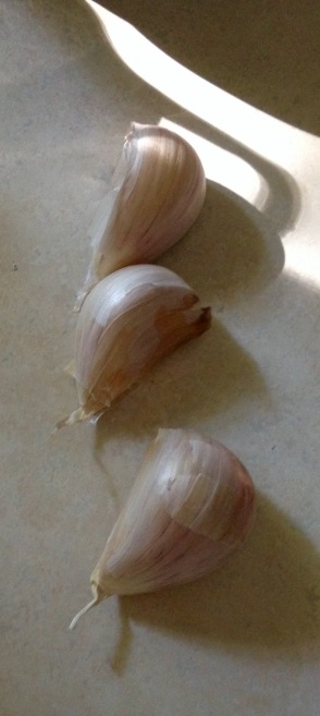 fall sewing garlic
