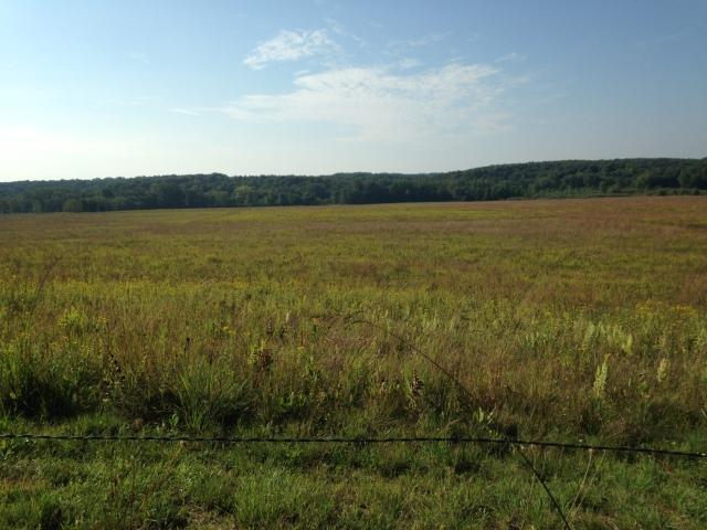 prairie goldenrod ragweed nofarmneeded