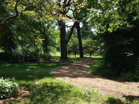 MortonAboretum_NoFarmNeeded_Trees
