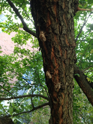 Cicada shells on a branch - NoFarmNeeded