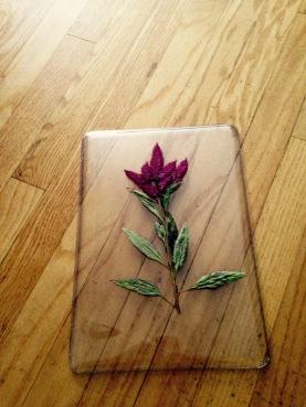 Celosia Pressed Flower Computer Case