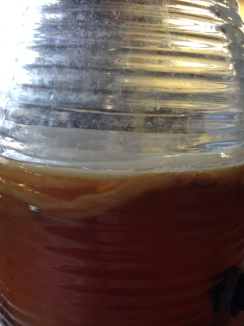 Kombucha NoFarmNeeded