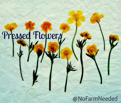 NoFarmNeeded Pressing Flowers