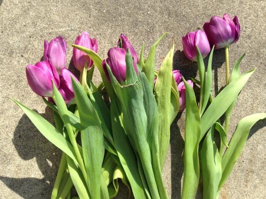 Tulips NoFarmNeeded