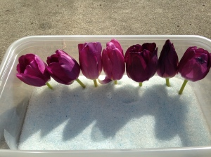 Tulips Silica Gel NoFarmNeeded