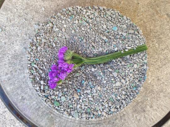 Flower in Cat Litter NoFarmNeeded