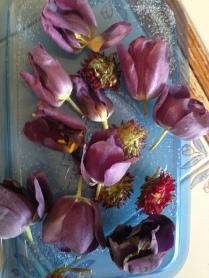 Tulip in a Conatiner