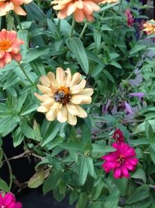 Pollinators NoFarmNeeded