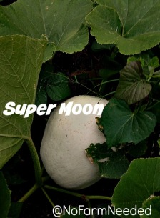 SuperMoon NoFarmNeeded