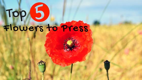 Flowers to Press NoFarmNeeded
