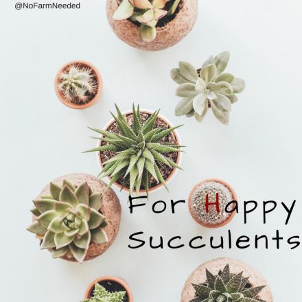 Happy Succulents NoFarmNeeded