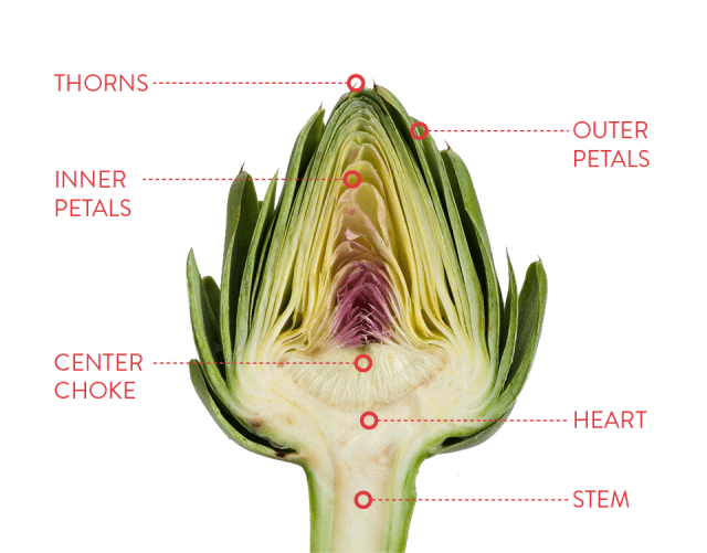 how to eat an artichoke.png