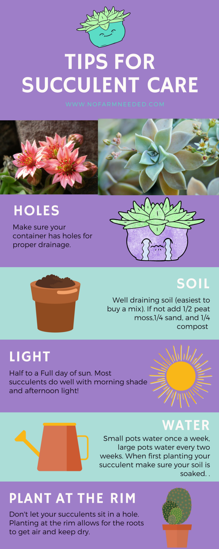 Tips for Planting Succulents NoFarmNeeded