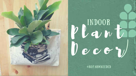 Indoor Plant Decor NoFarmNeeded