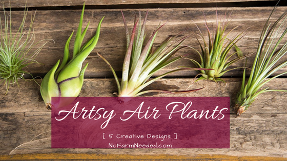 Artsy Air Plants NoFarmNeeded